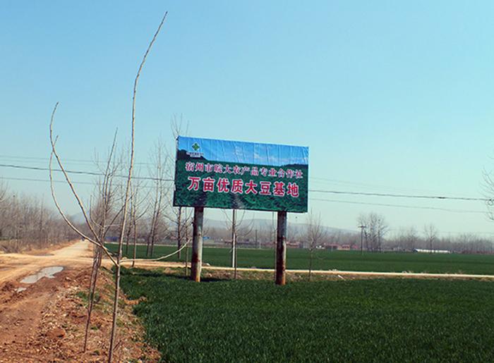 万亩大豆基地